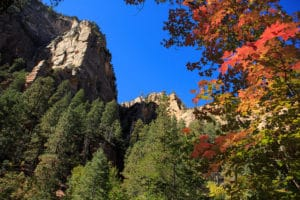 Fall Colors in Sedona's Oak Creek Canyon